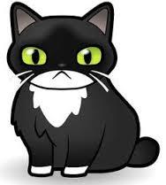 CAT TUXEDO 1